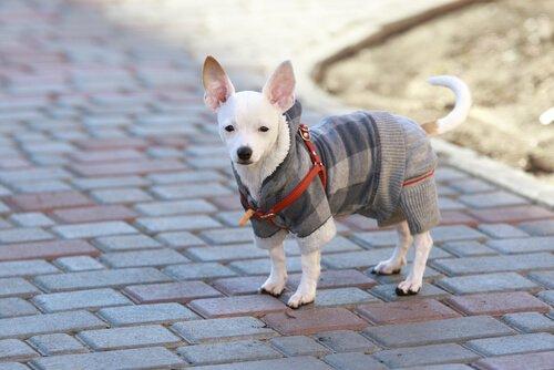 Kışın Köpeğime Nasıl Bakmalıyım?