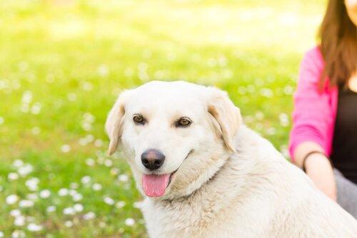 Köpeğinizin Sevmediği 5 Şey Nedir?