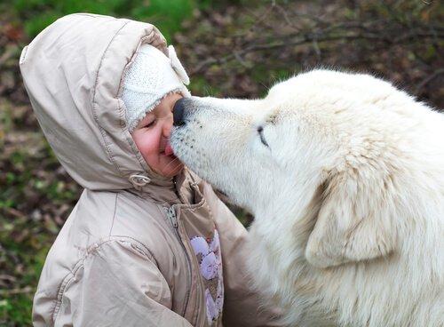 Köpeğinizin Yüzünüzü Yalamasına İzin Vermeli Misiniz?