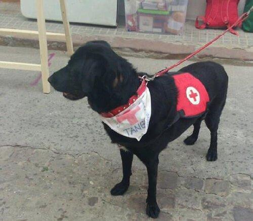 İstismar Edilmiş Köpek Artık Terapi Köpeği Olarak Çalışıyor