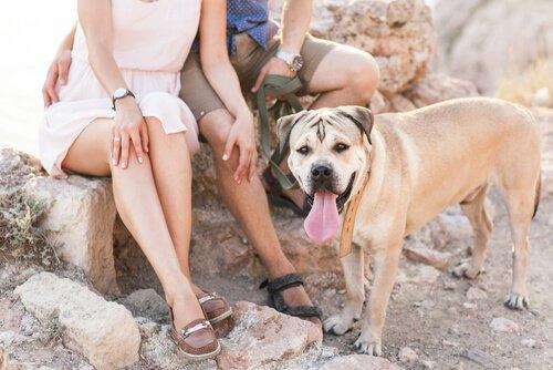 Bir Köpek Sahibi Olmak İçin 5 Sebep