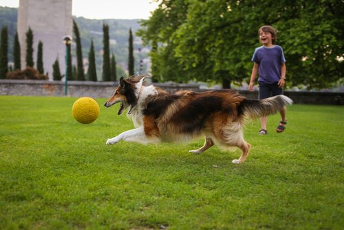 köpekle oynayan çocuk