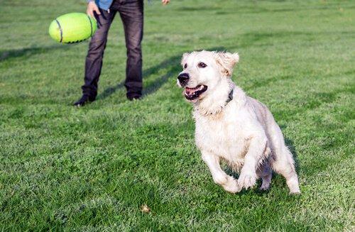 Köpek Severlere Asla Söylememeniz Gereken İfadeler