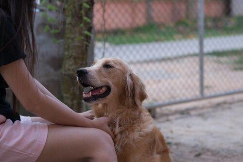 Köpekler Konuştuğumuz Dili Anlayabilir mi?