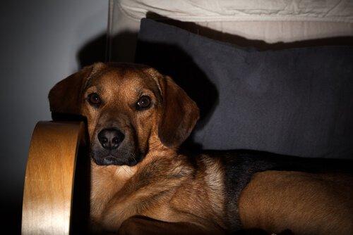 televizyon izleyen köpek