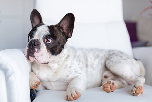 Köpekler Televizyonda Ne İzler?