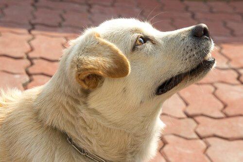 Köpekler Zamanı Algılayabilir Mi? Evet, Hem de Burunları ile!