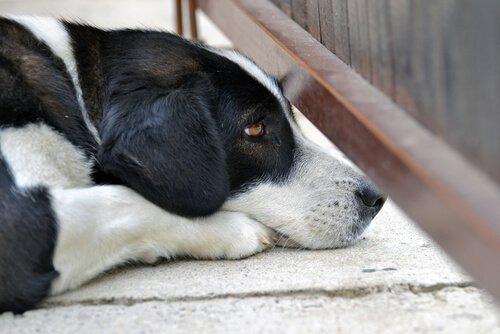 korkarak bakan köpek