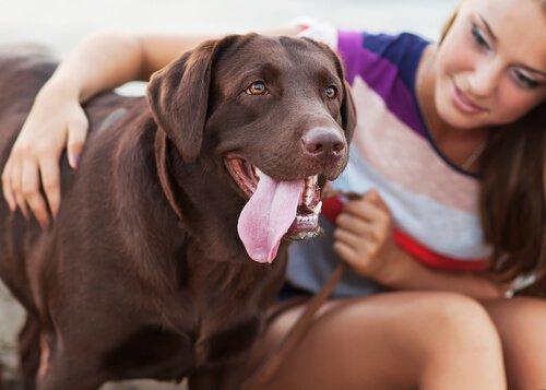 koruma köpekleri ve kadınlar