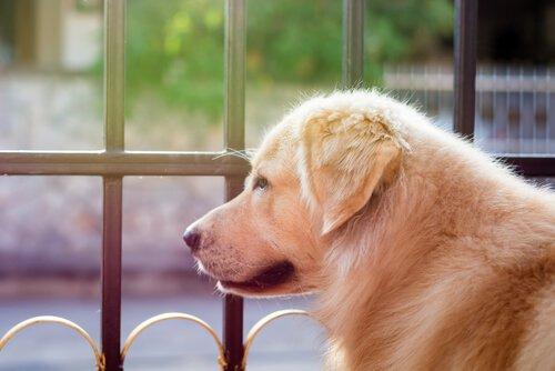 George Clooney Köpekleri Kurtarmak İçin 10,000 Dolarlık Bir Bağış Yaptı