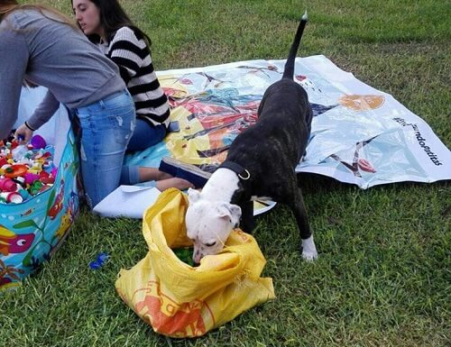parkta mama yiyen köpek