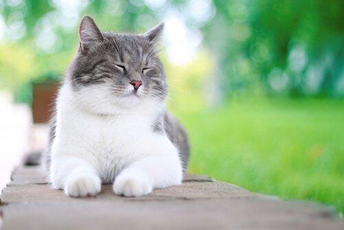 Mutlu Kediler İçin 5 İpucu