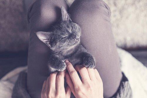 mutlu yavru kedi