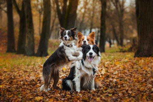 ormanda köpek ailesi