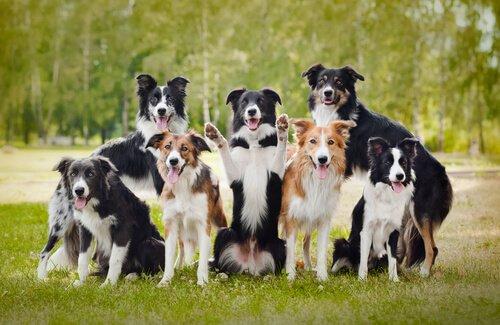 Köpekler Hakkında 21 Şaşırtıcı Gerçek: 2. Bölüm