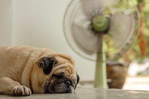 Sıcak Havalarda Köpeğimin Bakımı Nasıl Olmalı?