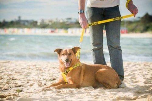 sarı tasmalı köpek ve sahibi
