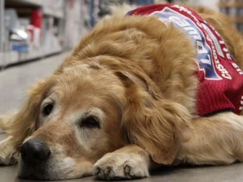 Hem Savaş Gazisi Hem de KöpeğiBir Mağaza Tarafından İşe Alındı