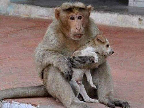 Bir Sokak Köpeğini Sahiplenen Maymun