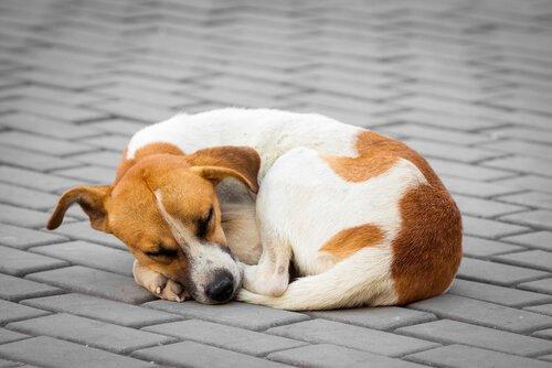 kaldırımda yatan sokak köpeği