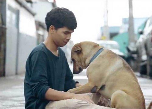 Genç Taylandlı, Sokak Köpeklerine Sarılma Kampanyası Başlattı