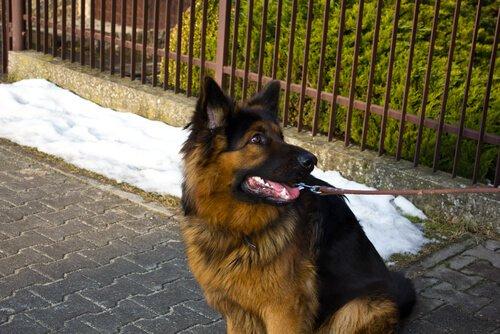 köpeklerde davranış problemleri