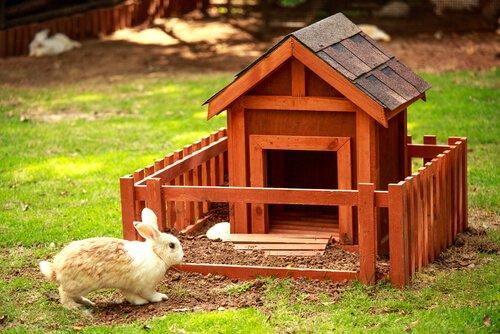 tavşan kulübesi
