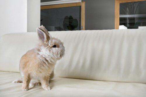 Evcil Hayvan Olarak Tavşan Beslemek Gerçekten Mümkün Mü?