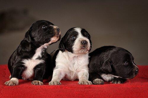 Temel Yavru Köpek Eğitimi