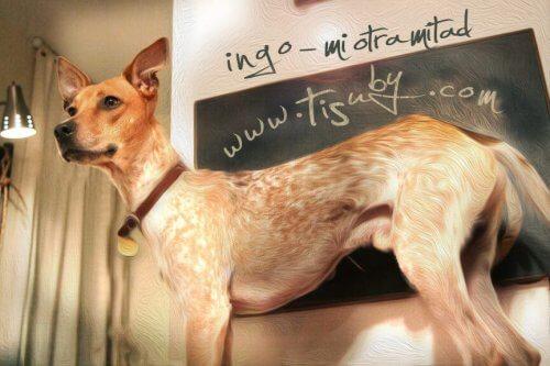 Venezuelalı Sanatçı Köpeğine Şarkı Yazdı