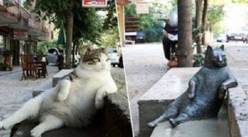 İstanbul'un ünlü kedisi ve heykeli