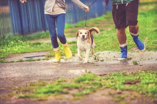 Köpeğinizle Yağmurlu Bir Günde Nasıl Yürürsünüz?