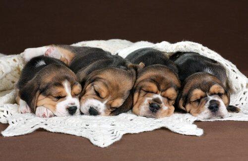 en güzel köpek ırkları
