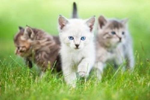 mutlu kediler