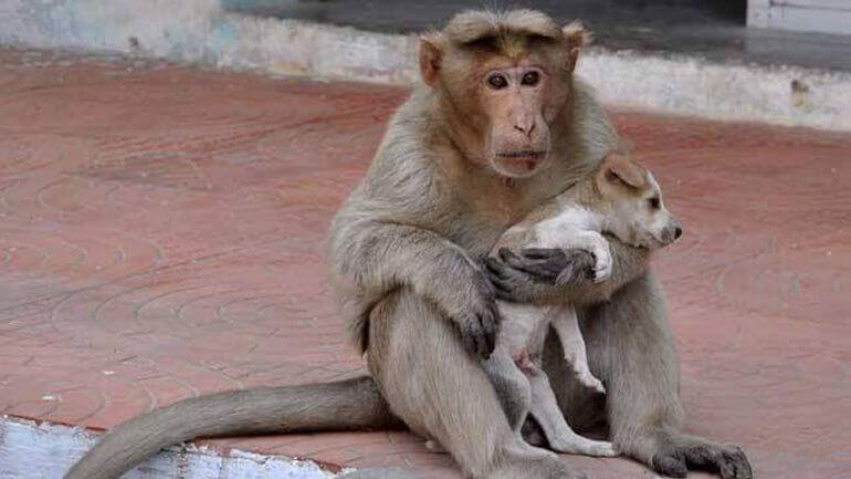 Yavru Köpeğe Annelik Yapan Maymun