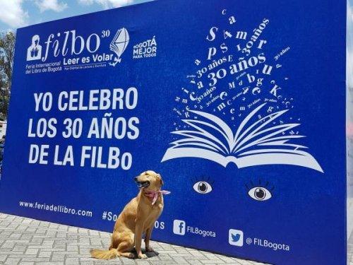 kitap yazan köpek