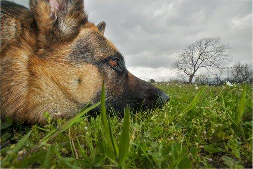 Köpekleri Zehirleyen Bitkiler