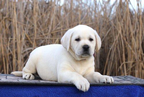 ünlü köpek