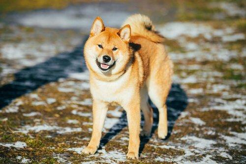 televizyonun en ünlü köpekleri
