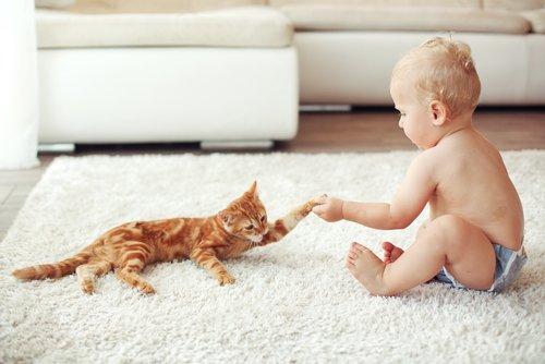 yavru kediyle bebek
