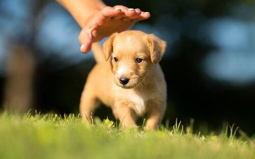 Yavru Köpek Sahiplenmeden Önce Bilmeniz Gerekenler
