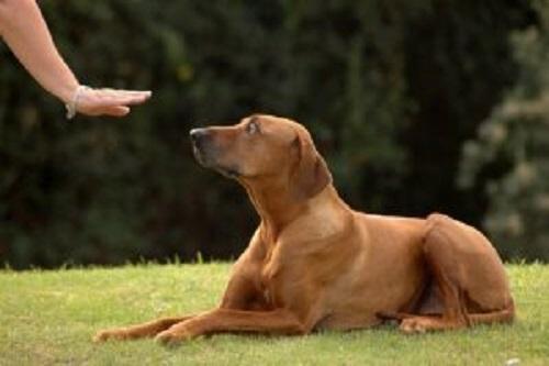 köpekleri eğitirken yapılan hatalar