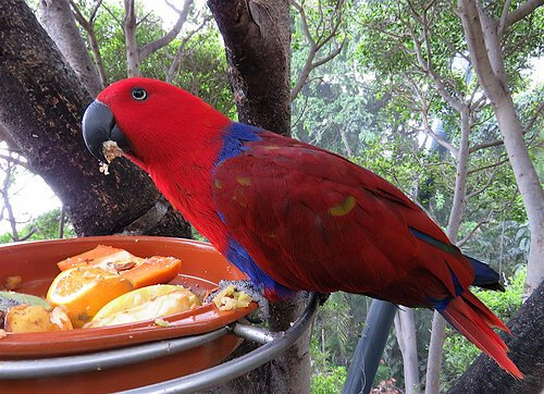 Papağanlar İçin Ev Yapımı Yiyecekler