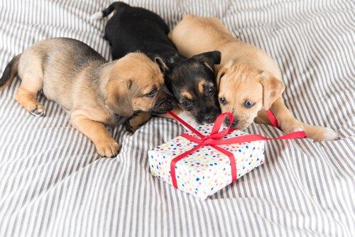 Evcil Hayvanlar İçin Hediye Seçimi