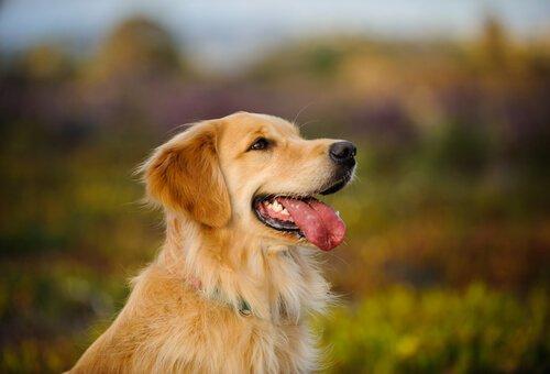 akıllı köpekler