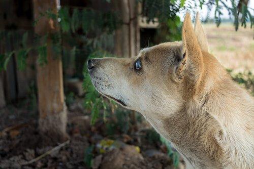 gözleri görmeyen köpeklerin bakımı