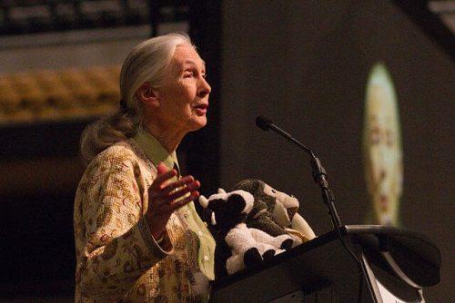Jane Goodall Kimdir?