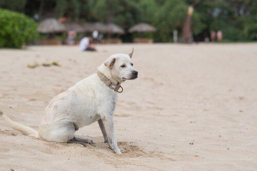 Köpeklerde Epilepsi Nedir ve Nasıl Tedavi Edilir?