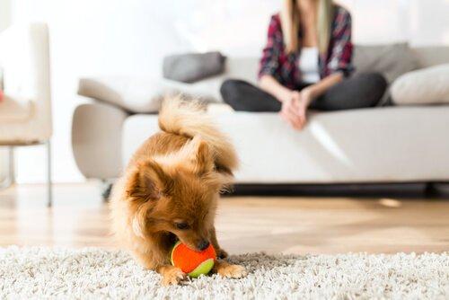 Köpek Davranışlarının Temel Yönleri