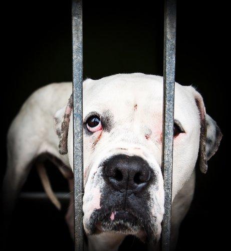 hayvan istismarı